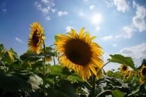 V piatok sa konečne oteplí, bude slnečno