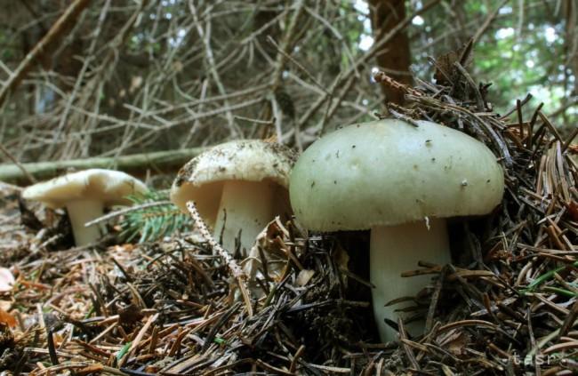Dávajte si pozor: Otravu hubami môže spôsobiť aj nesprávne skladovanie