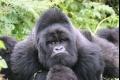 VIDEO: V americkej zoo utratili gorilu, do výbehu sa dostal chlapec