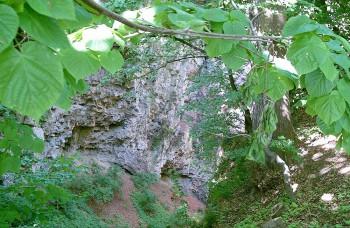 VIDEO: Premiéra Nesmrteľného lesa ukáže stromy staršie ako tisíc rokov