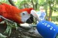 V košickej zoo pribudol jeden z najväčších papagájov sveta