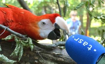Naše školy vychovávajú v mnohom ohľade len papagájov