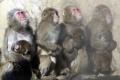 Vo Vietname obvinili troch mužov za zabitie vzácnych opíc
