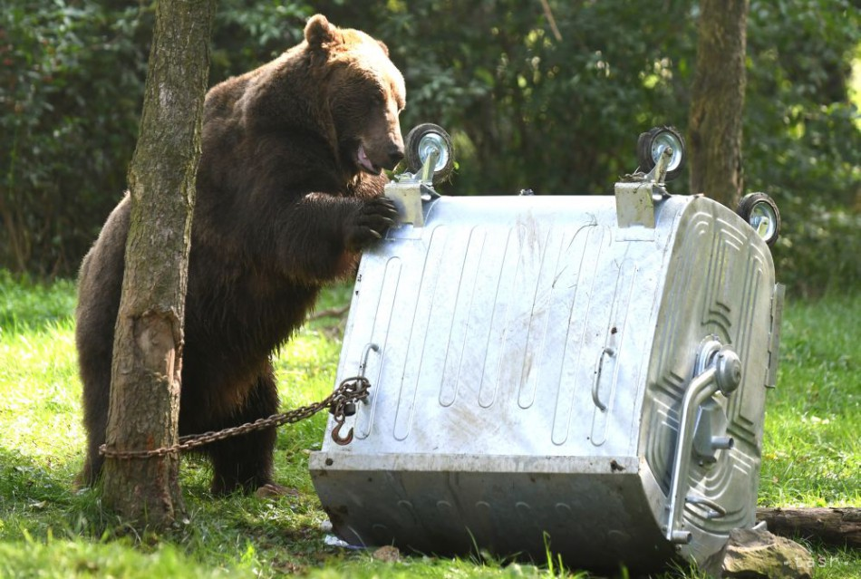 V košickej zoo testovali kontajner odolný voči medveďom
