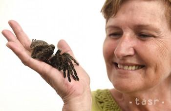 Bojíte sa pavúkov? Východoslovenské múzeum vám pomôže strach prekonať
