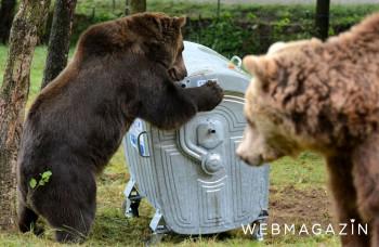 Ochranári: Situácia s medveďmi vo Vysokých Tatrách sa môže zopakovať