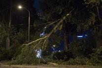 stromy, búrka, Bratislava