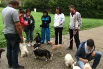 Zanedbané kastrácie: Premnožené psy zapĺňajú koterce