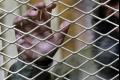 Z uzavretej psychiatrie v Nemecku ušli traja nebezpeční zločinci
