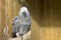 ZASMEJETE SA: Britská zoo izolovala päticu nadávajúcich papagájov