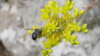 Počas leta hmyz útočí častejšie, bodnutie môže spôsobiť smrť
