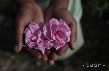 VIDEO: O ružový olej z Bulharska má záujem celý svet. Viete prečo?