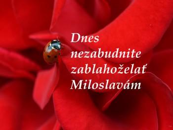 Miloslava je nezávislá