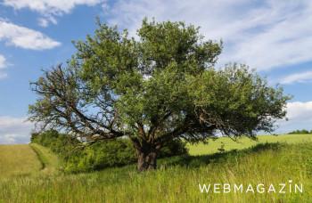 V ankete o Strom roka môžete hlasovať do konca septembra