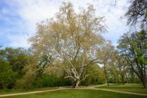 Môžete hlasovať za strom roka. O titul sa uchádza 12 finalistov