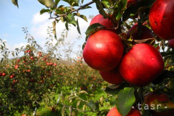 Aj jablko oslavuje svoj deň