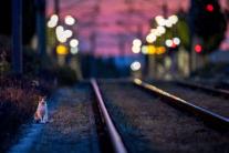 Čakanie na ranný vlak