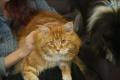 Počuli ste o najdlhšej mačke na svete? Toto je ona