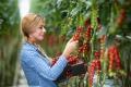 Bratislavčania nájdu sladké cherry paradajky z Babindola aj v Maline