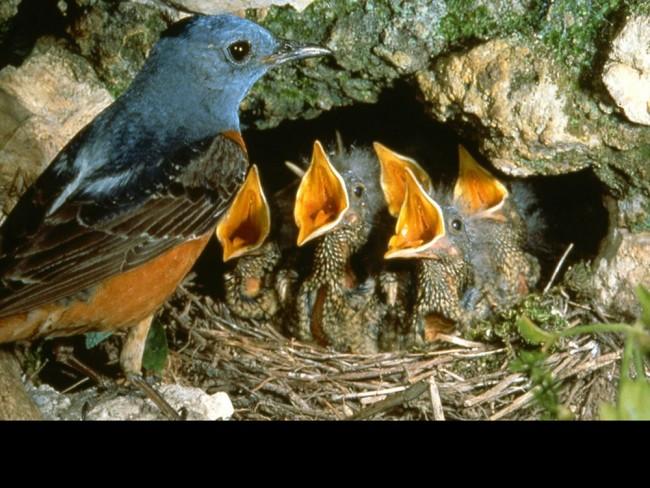 Vtáky sú indikátori stavu prírody a zverejnené výsledky podľa