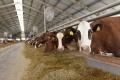 Sezónu v poľnohospodárskom múzeu v Nitre otvorí poľná železnica