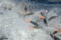 Ness City Triathlon láka deti aj elitných pretekárov