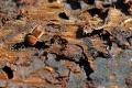 Lykožrút ničí zdravé tatranské lesy, podľa Matečnej nastal čas konať