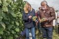 Vinohradníci bojujú so škorcami plynovými delami