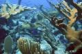 Archeológovia vyzývajú Albánsko, aby chránilo svoje podmorské nálezy