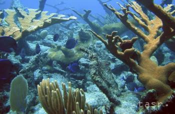 Mexickí výskumníci objavili päť nových korálových útesov