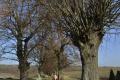 Mesto Prešov sa pustilo do boja s inváznymi drevinami