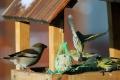 V blízkosti ľudí hniezdi veľké množstvo vtákov, potrebujú pokoj
