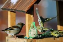 Obrázky mužských vtáky