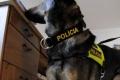 Polícia preveruje oznámenie o údajnej výbušnine v Bratislave