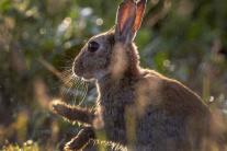 Aj králiky sa tešia na víkend