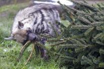Zvieratá v bratislavskej zoo si pochutnávajú na vi
