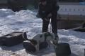 Psy z Heřmaníc pomáhajú colníkom po celom svete