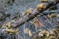 Migráciu ropúch bradavičnatých spomalilo cez víkend chladné počasie