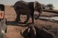 Botswana zrušila zákaz lovu slonov