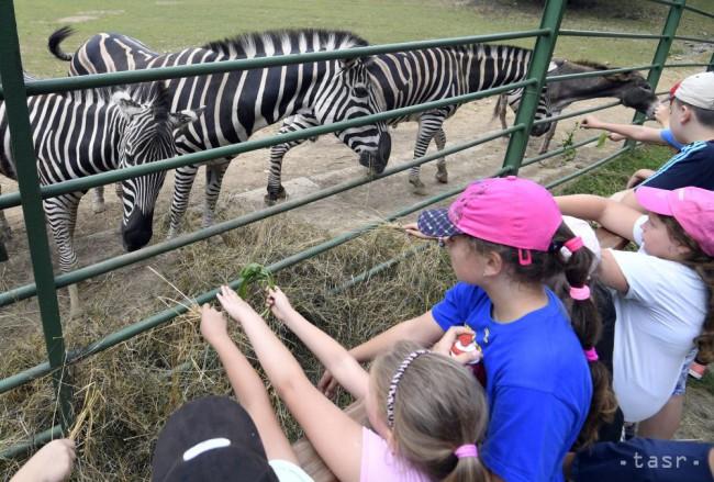 Bratislavská zoo si v nedeľu pripomenie Svetový deň zvierat - 24hod.sk fefeaddb5b0