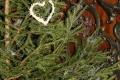 Lesníci začali s predajom asi 5000 vianočných stromčekov