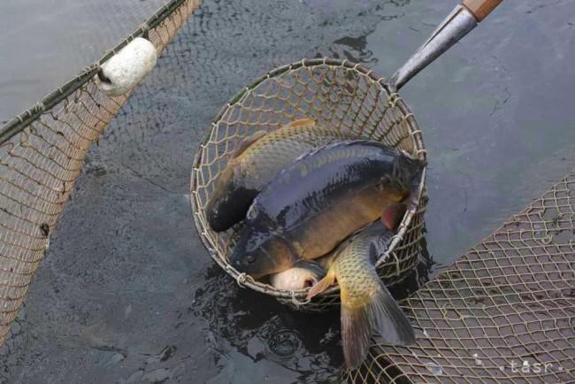 Rybárstvo sa zaraďuje medzi najmasovejšie formy trávenia voľného času af367782dc2