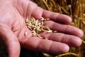 Tohtoročná úroda obilnín v SR by mala byť medziročne vyššia o 11,4 %