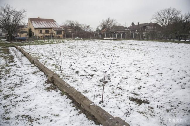 Na snímke triedne záhradky na Základnej škole v Záhorskej Vsi 1b5ecedc3e4