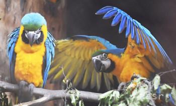 Spišskonovoveská zoo privíta prvých návštevníkov už 20. apríla