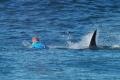 Mladíka napadol žralok v Austrálii, kde vlani zahynul surfista