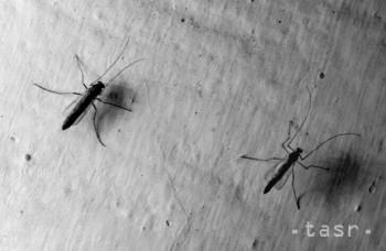 Komáre útočia: Ako zabrániť, aby vám nepili krv?