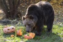 Envirorezort vyzýva verejnosť, aby neprikrmovala tatranské medvede