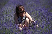 Levanduľové pole v Svinnej