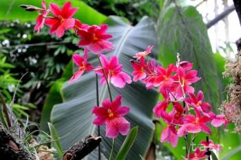 Na odkúpenie časti pozemkov pre Botanickú záhradu chýbajú peniaze